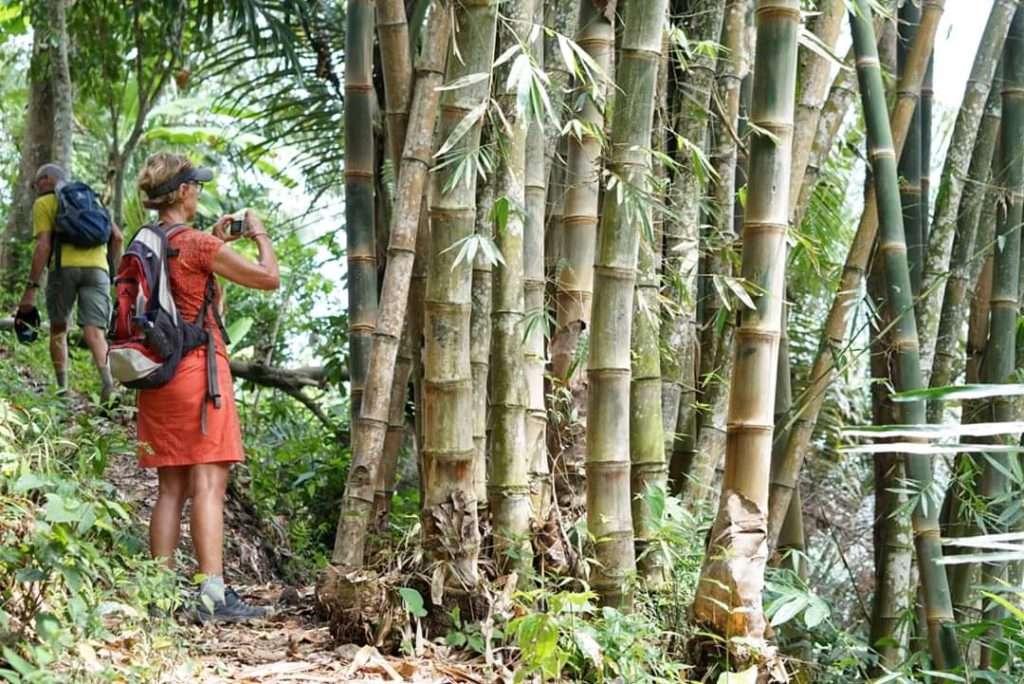 Bali Jungle Trekking (USD 20 Off)